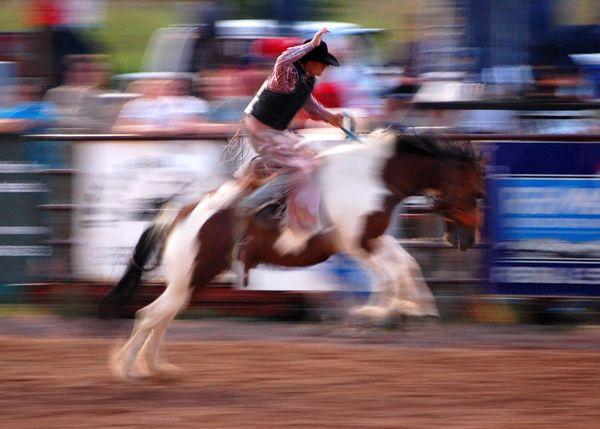 Ride em' Cowboy thumbnail