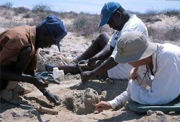 A field crew in Kenya