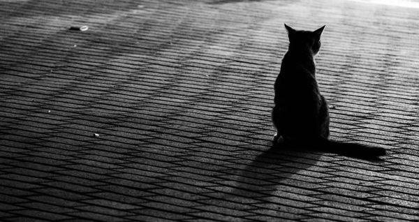 gato mirando a la nada thumbnail