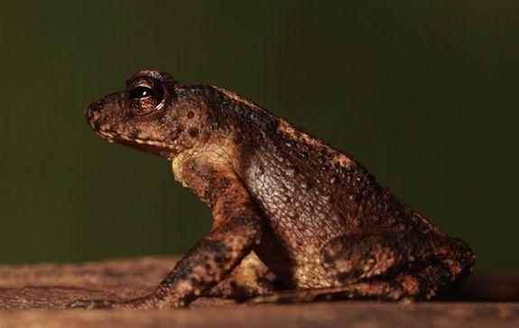 Toad-rare.jpg