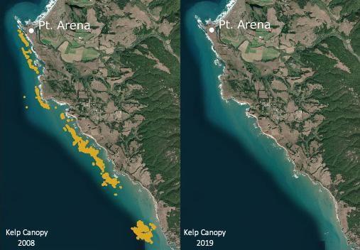 bull kelp cover in northern california