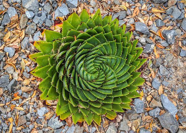 Symmetry thumbnail