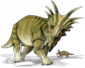 20110520083228Styracosaurus-restoration-300x240.jpg