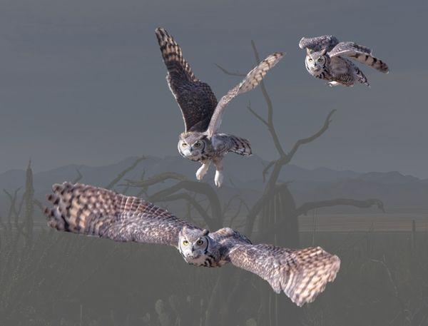Owl taking flight thumbnail