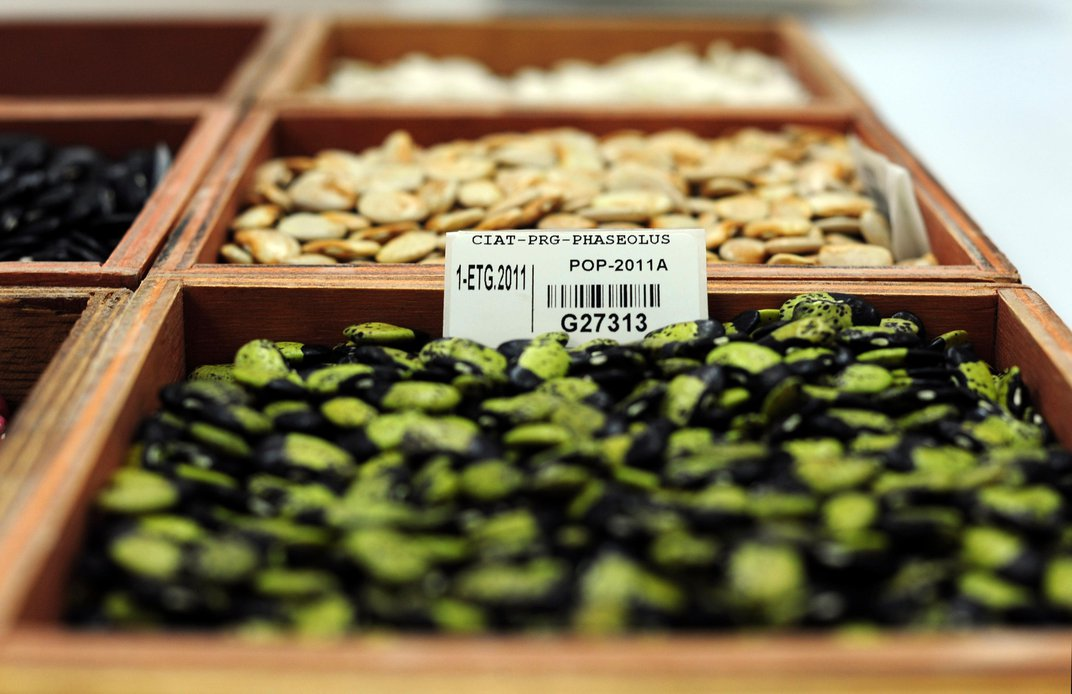 From Lack Of Diversity To Lack Of Funding, Seed Banks Face a World Of Challenges