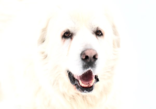 Dog In Snow thumbnail