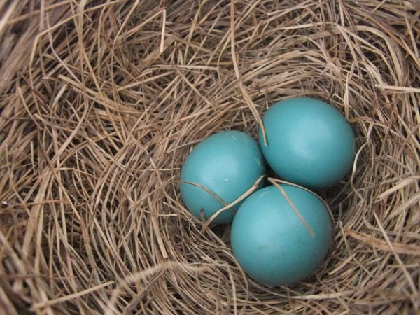 Robin Eggs 2019 thumbnail