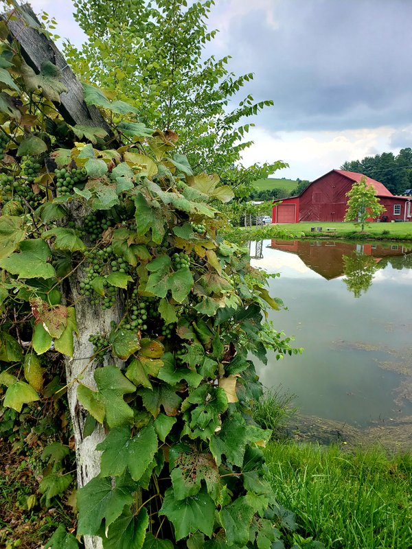 Red barn at Linville Winery. thumbnail