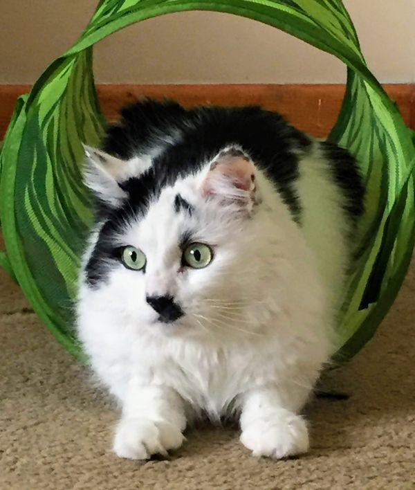 Pretty Kitty thumbnail