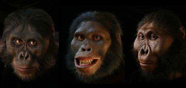 evolution faces