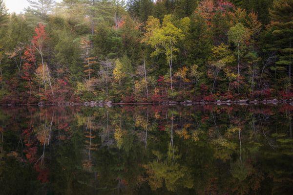 Nature's Foliage Painting thumbnail