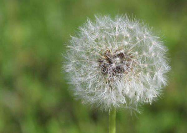 Make a Wish thumbnail