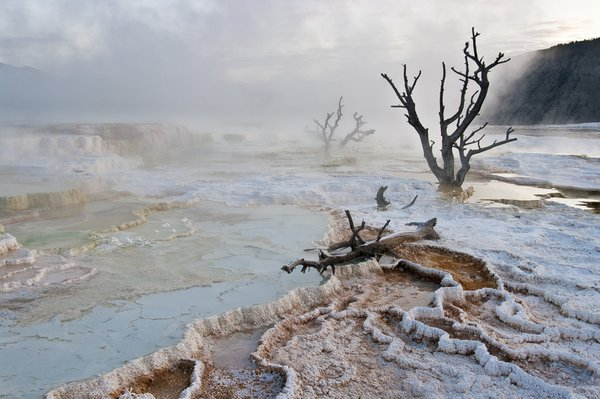 Steam from Mammoth Hot Springs in Yellowstone national Park drifts past the twisted forms of dead trees. thumbnail