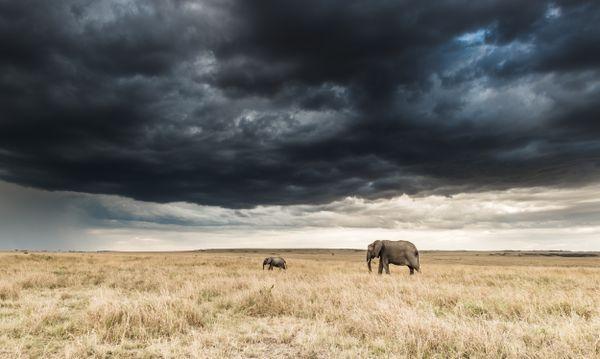 MASAI MARA - ELEPHANT SCAPE thumbnail