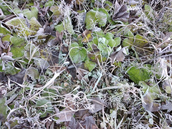 Frost and dew on the leaves while climbing Mount Igman thumbnail