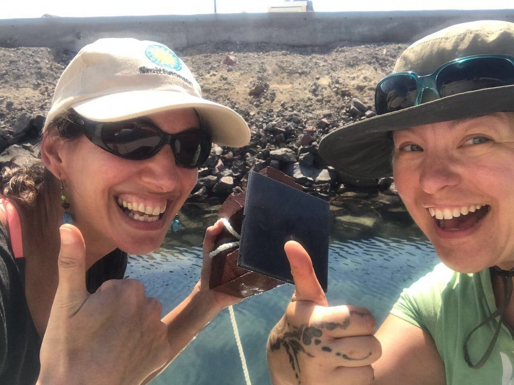 From Refuge Cove in Alaska to San Francisco Bay to Baja California and at the Pacific entrance to the Panama Canal, a team from the Smithsonian Tropical Research Institute and Temple University deployed panels to find out what limits marine invertebrate invasions. Here, Laura Jurgens and Carmen Schloeder, celebrate a successful deployment in Mexico (Laura Jurgens)