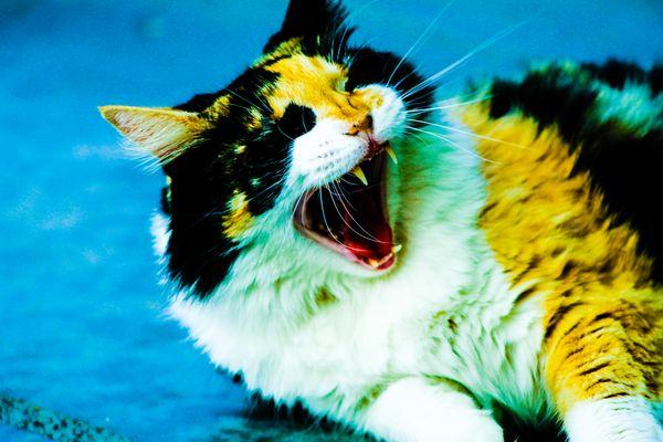 My cat Marshmallow feeling a little bit sleepy...or ferocious? thumbnail