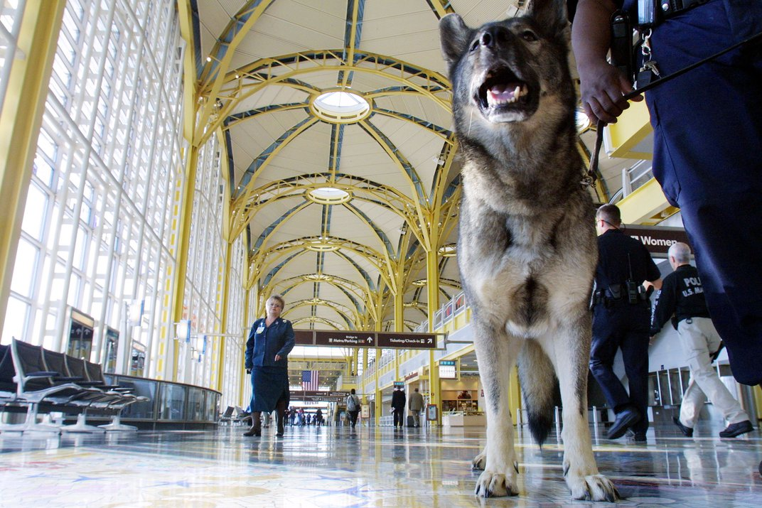 Bomb sniffing dog at National Airport