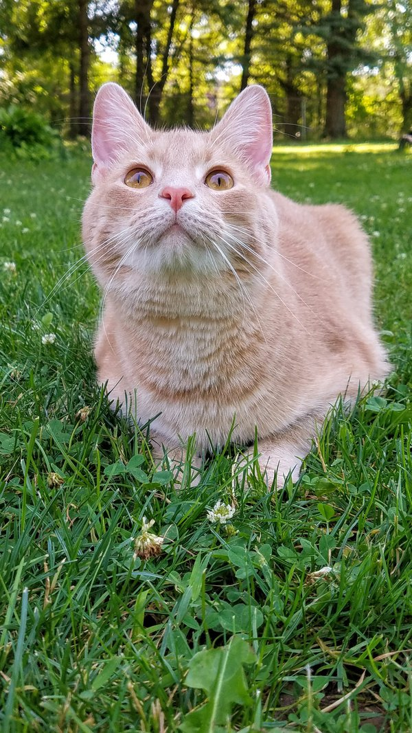 Cat enjoying the summer  thumbnail