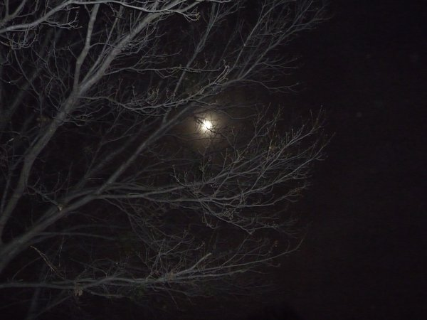 Full moon through tree branches thumbnail