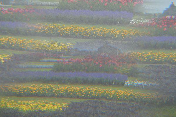 A garden in a foggy morning thumbnail