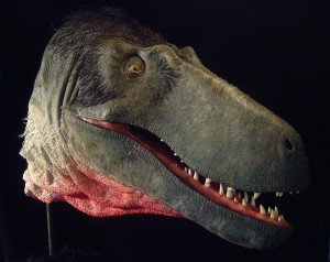 20110520083216Dryptosaurus-head-300x238.jpg