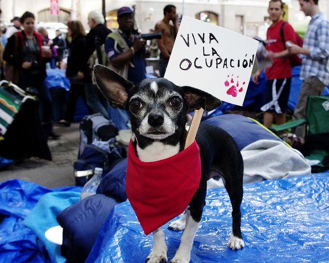occupy-bank.jpg