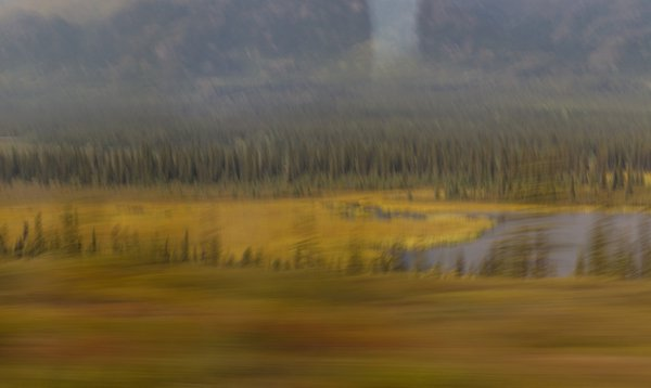 Denali Autumn Abstract thumbnail