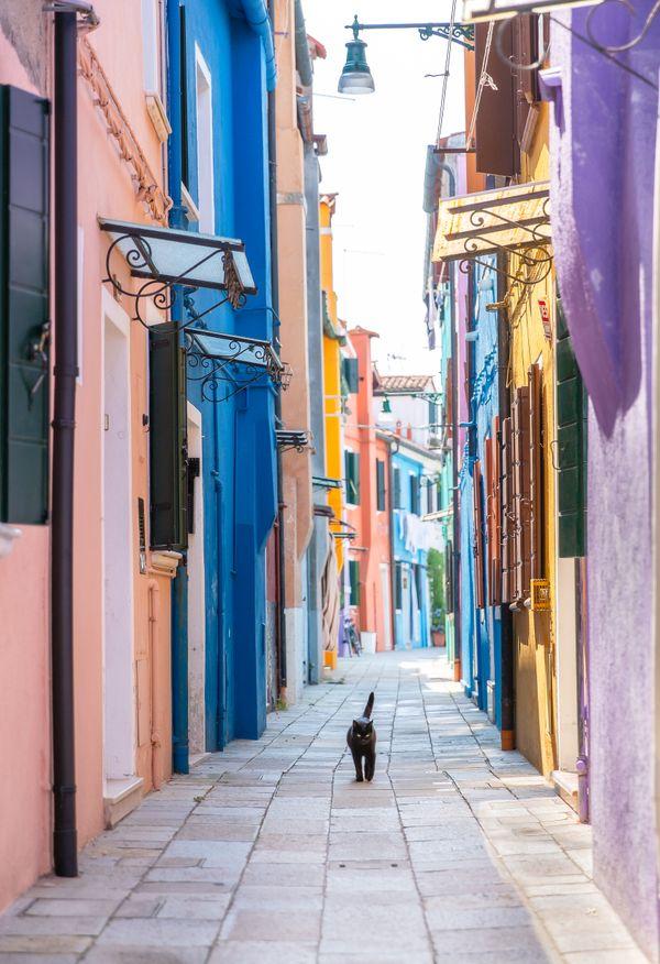 Black Cat in Burano thumbnail
