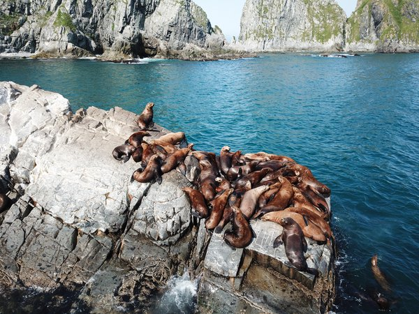 Sea lions in the Kamchatka Peninsula thumbnail