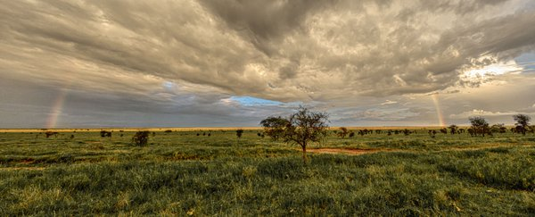 Both ends of a rainbow are visible emanating from stormclouds over the Serengeti. thumbnail