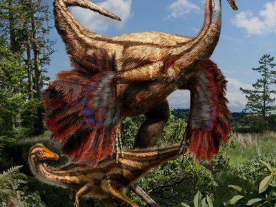 Not only was Ornithomimus feathered, but the dinosaur's fluffy coat changed as it aged.