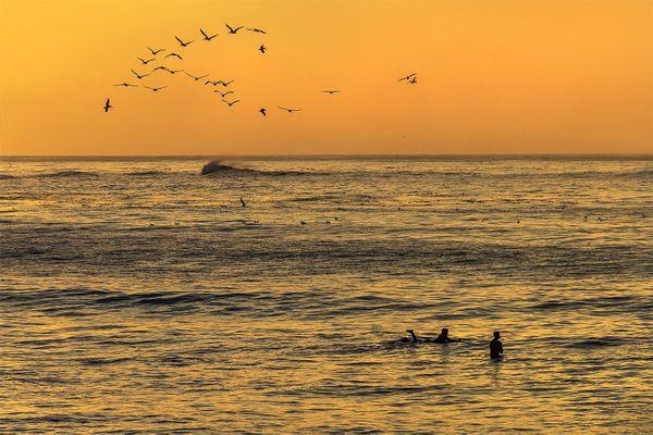 Sunset Surfers, Asilomar Beach, California thumbnail