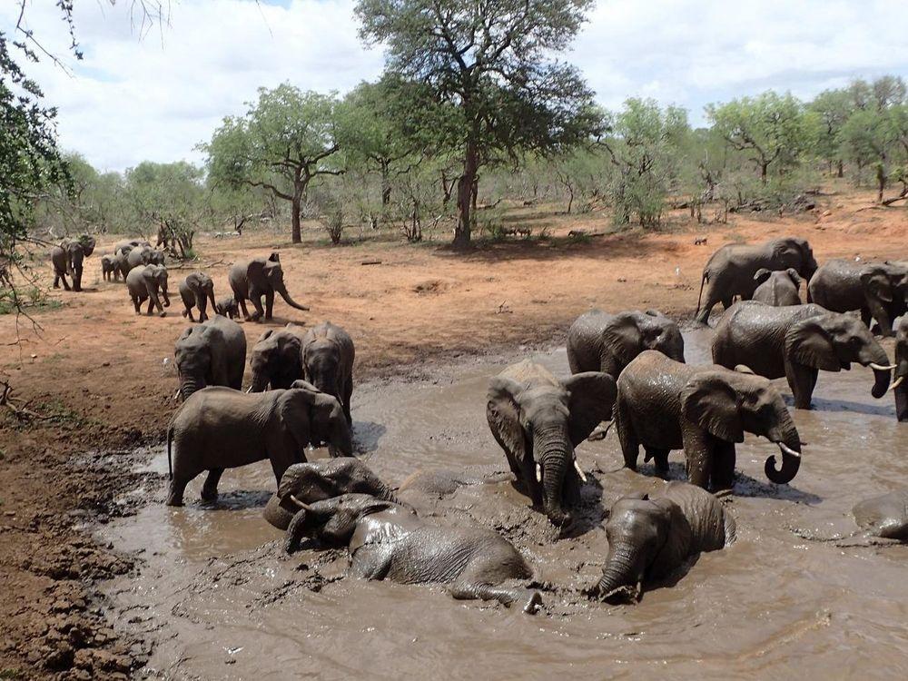 Elephants Watering Hole