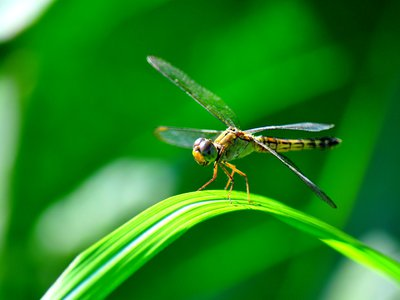 Flying insects are usually creepy, but many people love dragonflies.