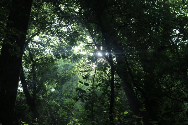 When light shines through trees. thumbnail