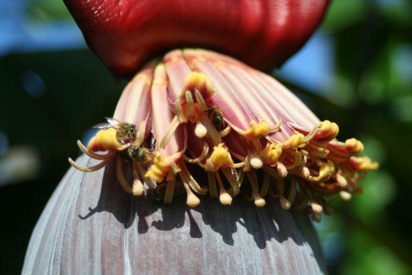 Bananas & Bees thumbnail