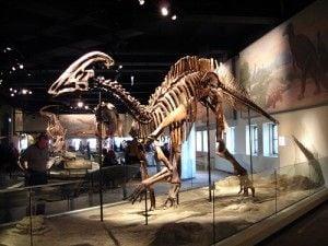 20110520083137parasaurolophus-field-museum-chicago-300x225.jpg
