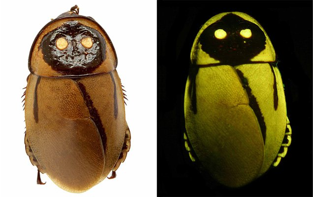 Glowing-roaches.jpg