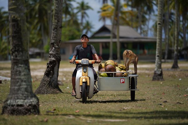 Plucking coconut business thumbnail