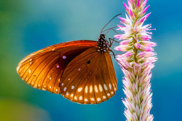 Beautiful butterfly and flower thumbnail