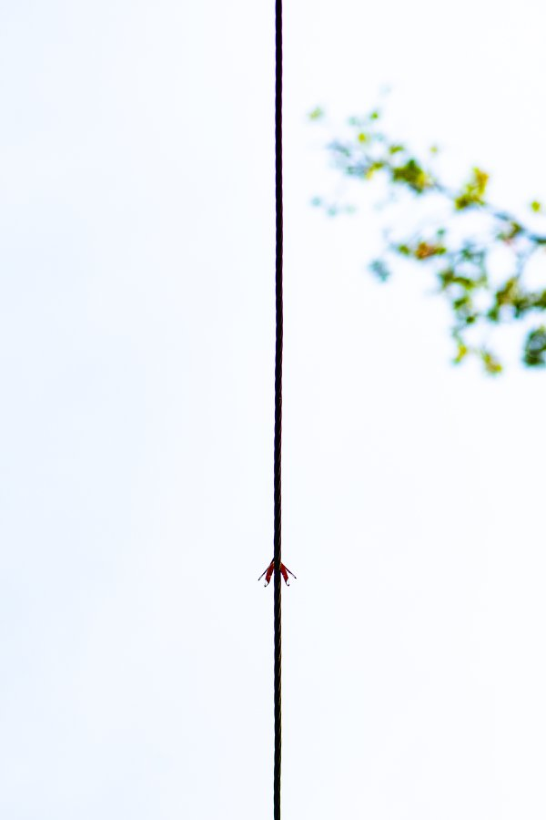 Arrow - A dragonfly on a wire thumbnail