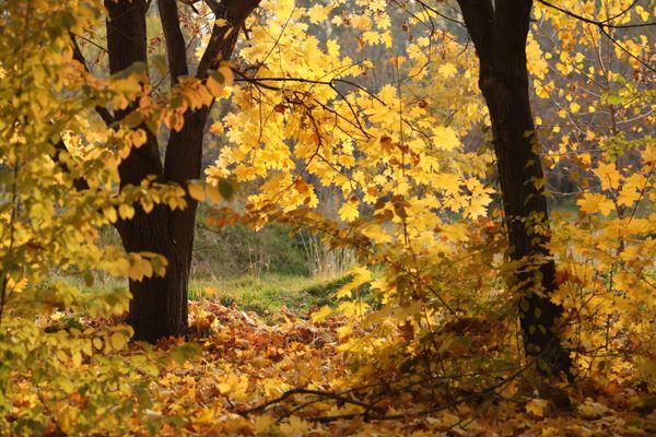 The autumn colours thumbnail