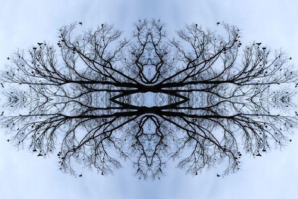Nature's Vortex thumbnail