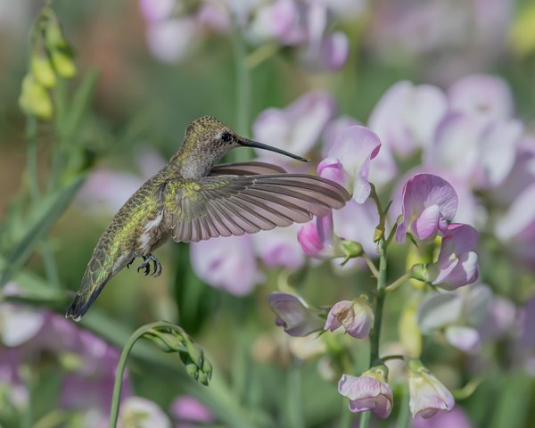 Pollinator At Work thumbnail