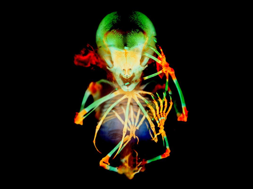 From a Zebrafish to Nylon Stockings, See This Year's Small World Photography Winners