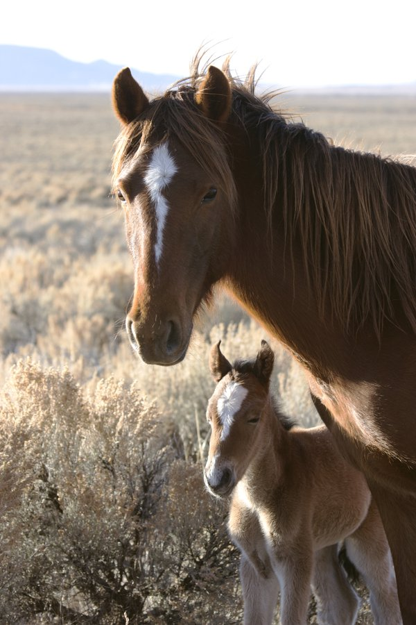A mom and her two week old foal thumbnail