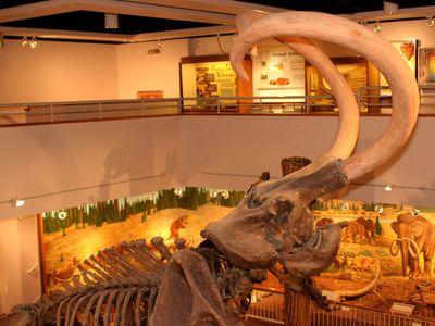 Prehistoric Museum, Utah State University Eastern