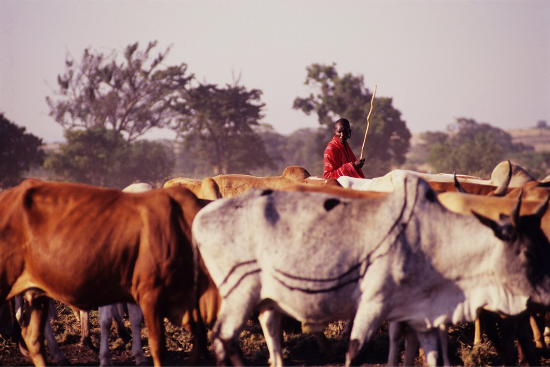 Ritual Cemeteries—For Cows and Then Humans—Plot Pastoralist Expansion Across Africa