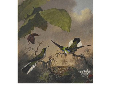Martin Johnson Heade, Black-eared Fairy, ca. 1863-1864, oil on canvas, 12 1/4 x 10 in.